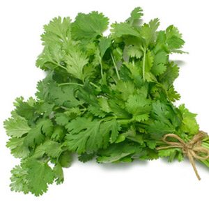 chipotle-fresh-cilantro
