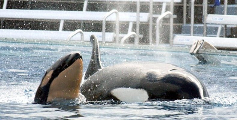 People are going to SeaWorld again