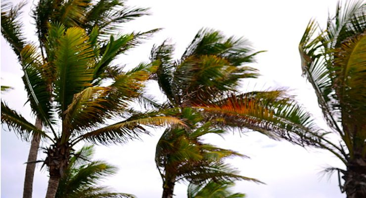 wind palm trees