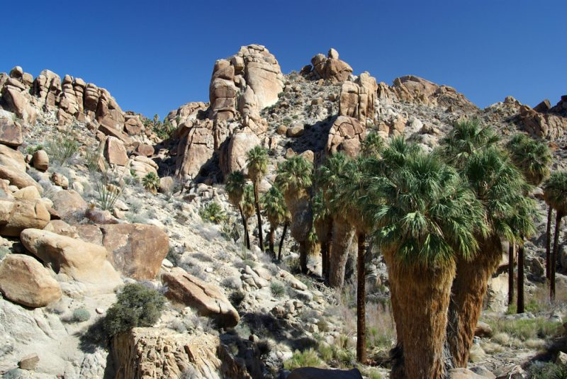 joshua tree national park black dating site The site preserves artifacts and other evidence of human habitation dating  us national park  devils tower national monument joshua tree national park.