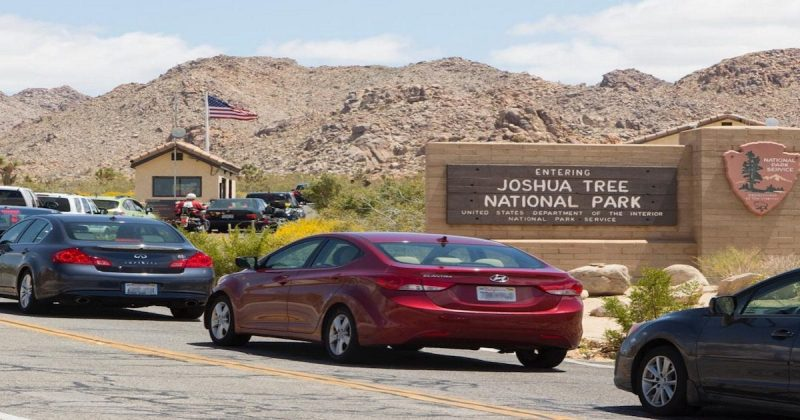 Joshua Tree National Park was crowded af during Thanksgiving Weekend