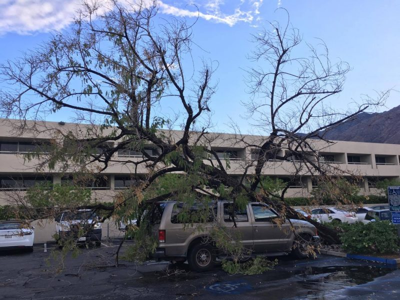 A tree falls on a car on a stormy day in Palm Desert