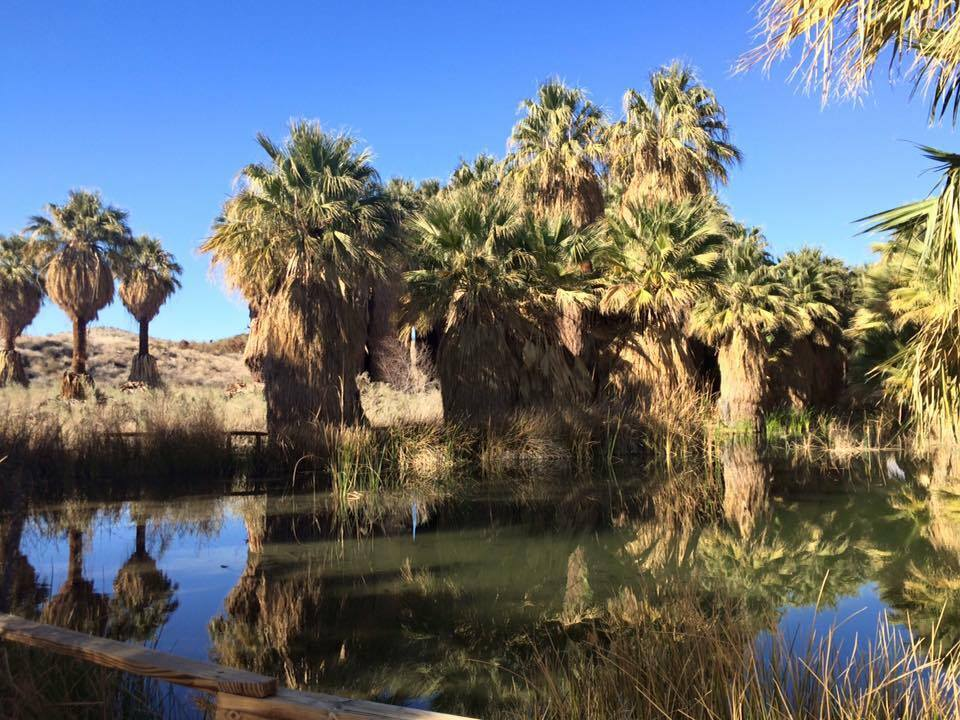 1000 Palms California Map.Coachella Valley Preserve Everything You Need To Know Cactus Hugs