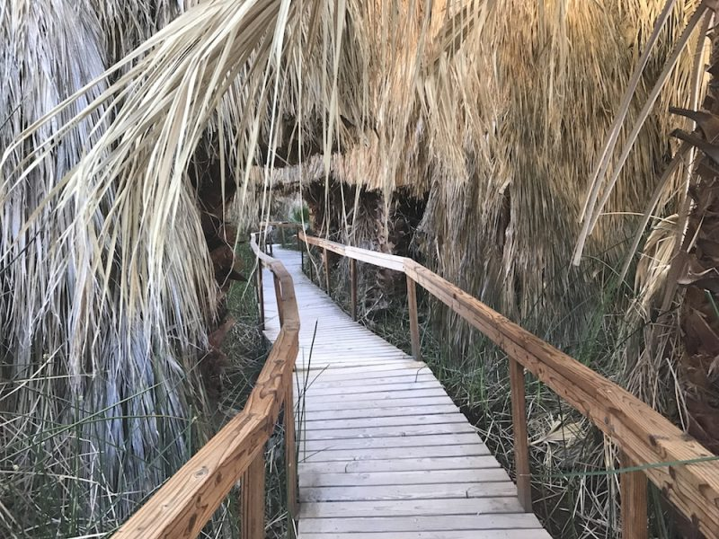 Coachella Valley Preserve walkway through the oasis in Thousand Palms