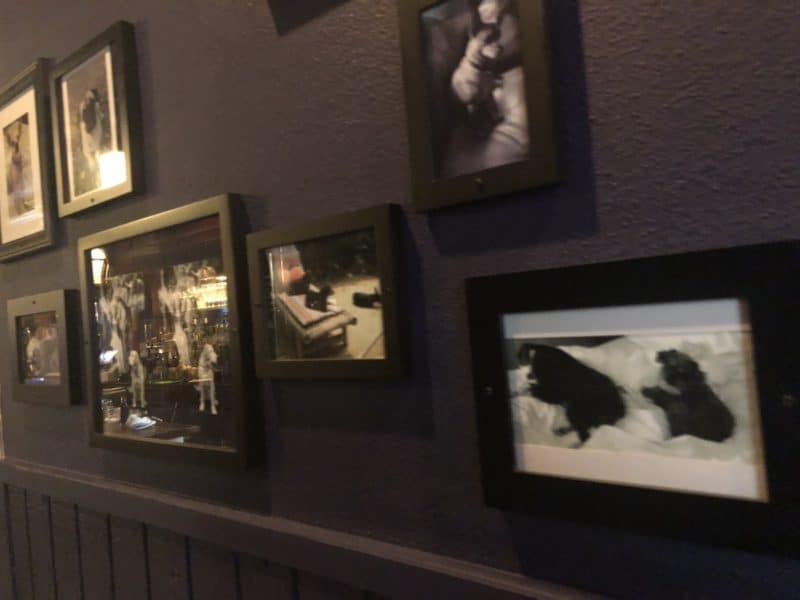 The wall of dog photos on the wall at Paul Bar in Palm Springs