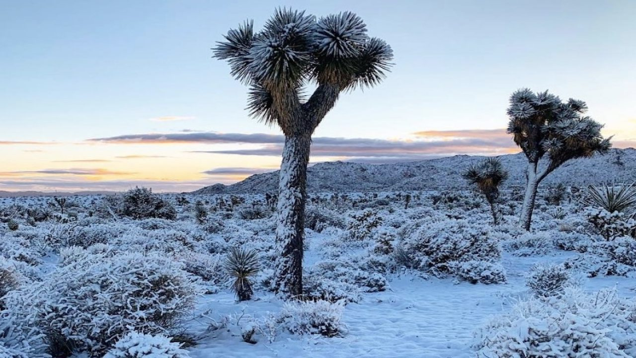 Photos Snow Falls In Yucca Valley Joshua Tree And The Hi