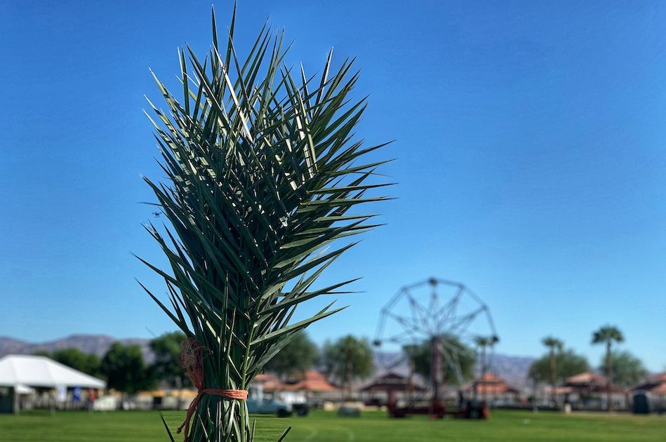 Photos: Here's a preview of this weekend's Date Harvest Festival